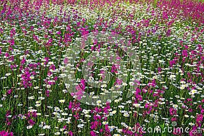 Fondo dai fiori che sbocciano su un prato immagini stock for Fiori che sbocciano