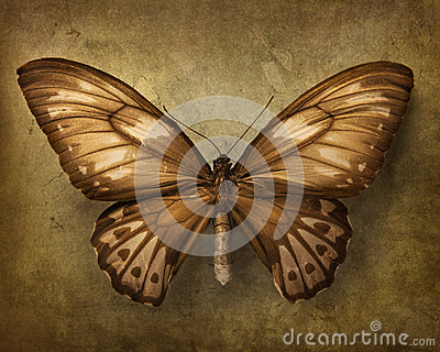 Fondo de la vendimia con la mariposa
