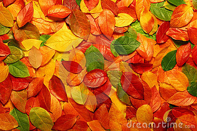 Fondo de las hojas de otoño