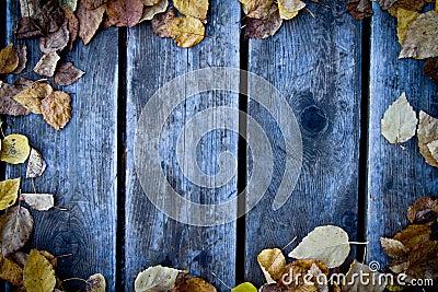 Fondo de madera de la caída