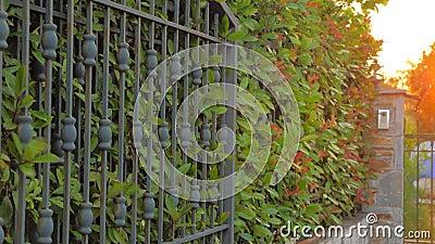 Fondo del borde de hojas verdes. Puertas forjadas cerrándose, abriéndose con hojas de arbustos brillando almacen de video
