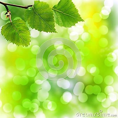 Fondo molle di Bokeh con le foglie della betulla