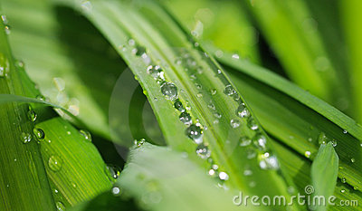 Fondo verde de la naturaleza