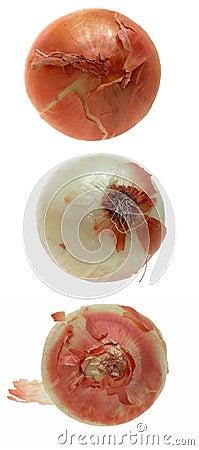 Food: Onion Trio