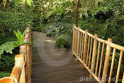Foot bridge leading to a tropical trail