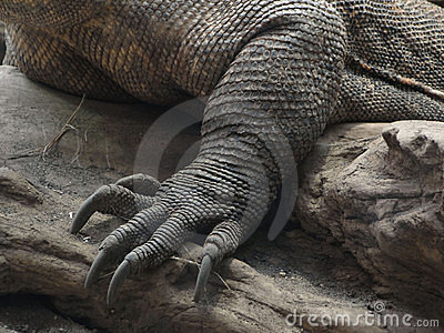 Foot and claws, detail,  Komodo