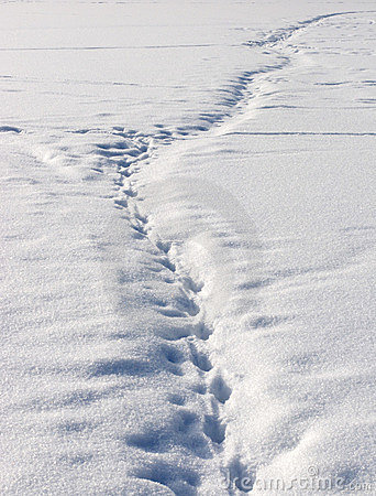 Foot path in snow