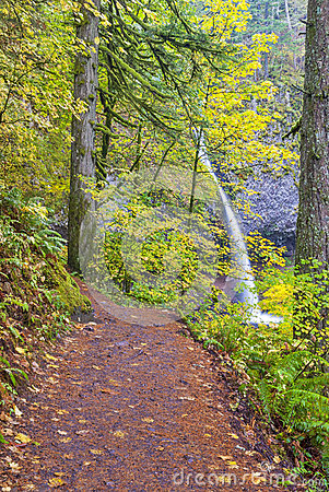Foot path to Pony Tail falls in Oregon