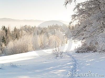 Foot path - winter