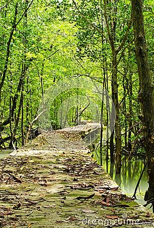 Footbridge at mangrove forest.