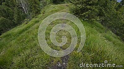 footpath stock footage