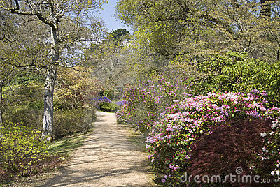 Footpath through beautiful trees and shrubs in Spr