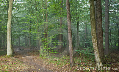 Footpath crossing misty autumnal forest
