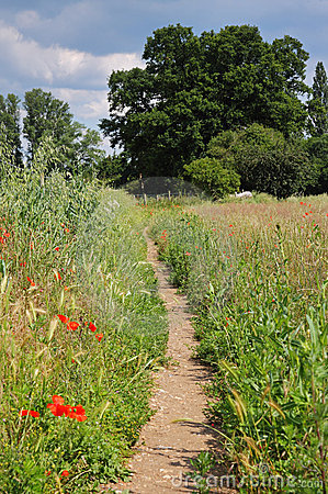 Footpath through an English Meadow with poppies