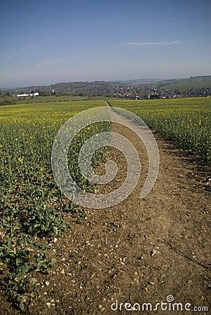 Footpath through field to village.