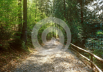 Footpath through the forest.