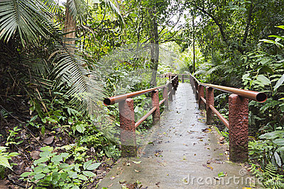 Footpath in Khao Yai national park
