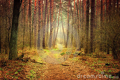 Footpath in mystic forest