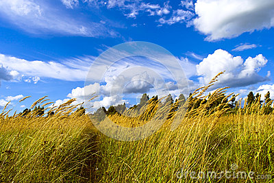Footpath among the tall grass under the blue sky with white clou