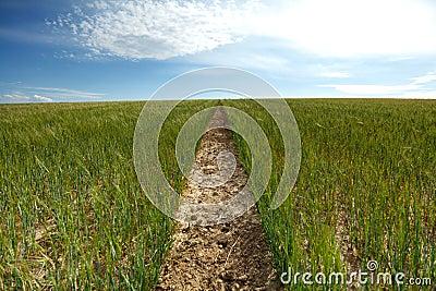 Footpath to horizon