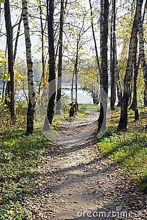 Footpath to lake