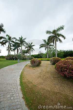 Footpath in tropical park