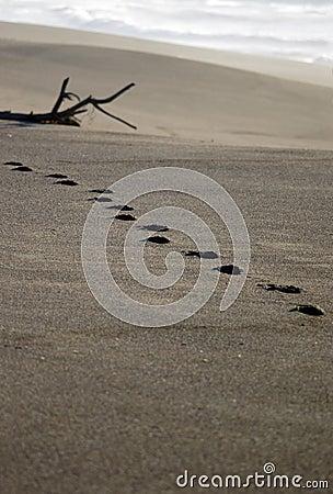 Footprints on distant beach