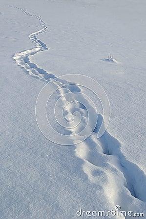 Free Footprints In Deep Snow Royalty Free Stock Photo - 64125485