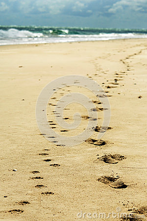 Free Footprints In Sand On Beach From Man & Pet Dog Royalty Free Stock Photography - 29542057