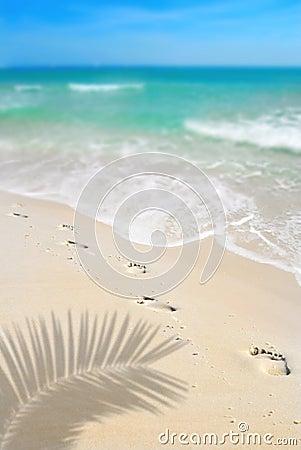 Free Footprints On Beach Royalty Free Stock Photos - 5591598