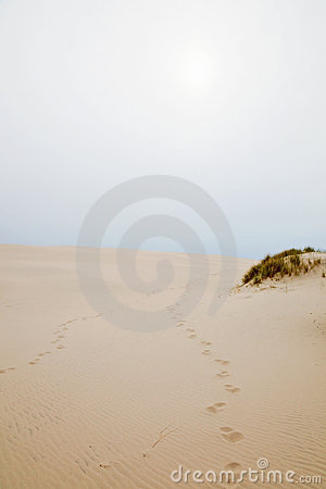 Footprints in sand dune