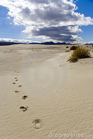 Footprints in a Sand Dune