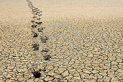Footsteps in arid land