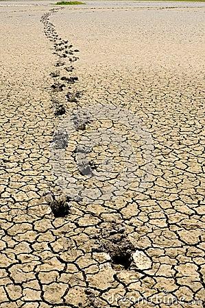 Footsteps in arid land