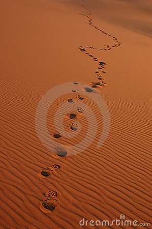 Free Footsteps In The Sahara Desert Stock Photography - 360652