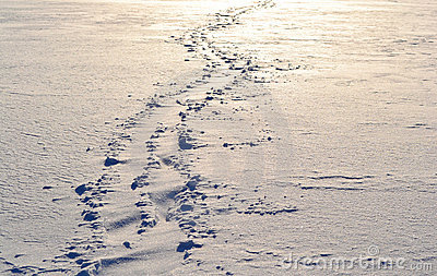 Footsteps on the snow