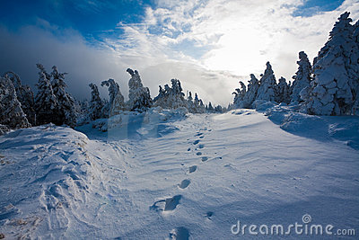 Footsteps in snowbound landscape
