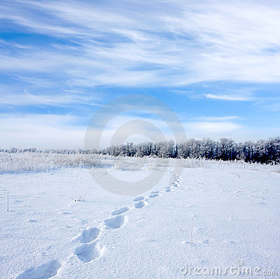 Footsteps on snowbound meadow