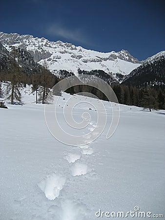Footsteps in Tirol / Tyrol