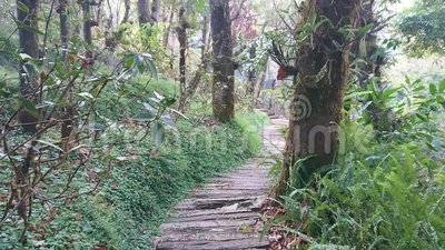 For?t de Mae Fah Luang Arboretum, Doi Chung Moob, Chiang Rai, Tha?lande banque de vidéos
