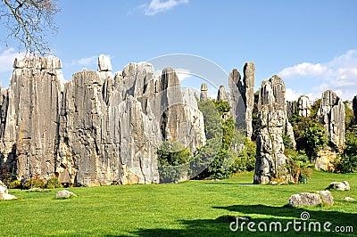 Forêt en pierre