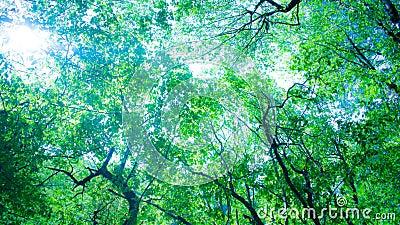 Forêt et soleil derrière les arbres banque de vidéos