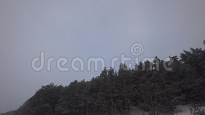 Forêt impeccable sous des flocons de neige banque de vidéos
