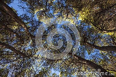 Forêt méditerranéenne