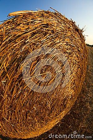 Forage round bales