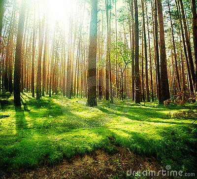 Free Forest Royalty Free Stock Images - 16021609