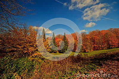 Colorful Canadian autumn forest landscape