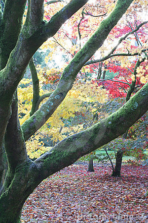 Forest autumn fall