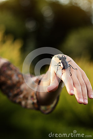Forest beetle on the human hand