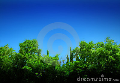 Forest and blue sky